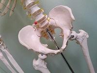 骨盤を整える