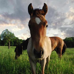 Spanish Mustang Preserve