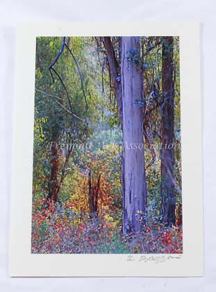 Painted Forest Greeting Card (RSB 522)