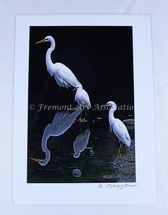 Mirage Egrets Card (RSB 505)