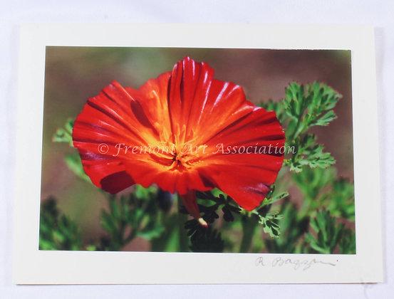 Red Orange Poppy Greeting Card (RSB 514)