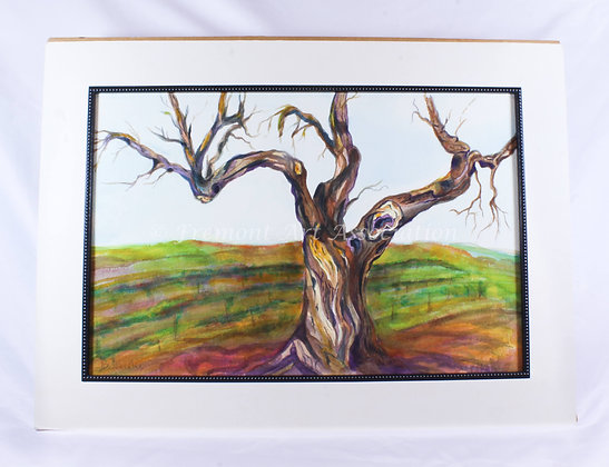 Twisted Oak (JAD 008)