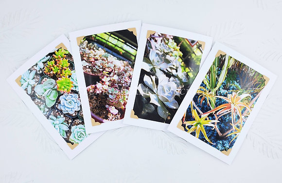"""Succulents and Such"" Greeting Cards (MTB 505)"