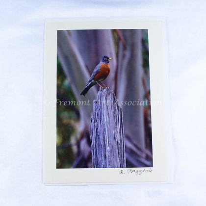 Red Robin Greeting Card (RSB 507)
