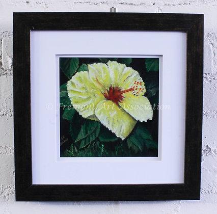 Hibiscus (DCB 004)
