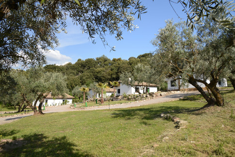 Die Gästehäuser sind in eine Parklandschaft mit Palmen, Oliven- und Obstbäumen eingebettet.