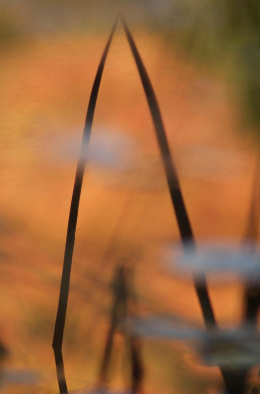 October Reflections - 32