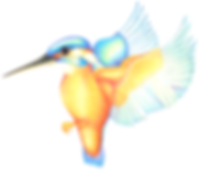 Kingfisher Edited.png