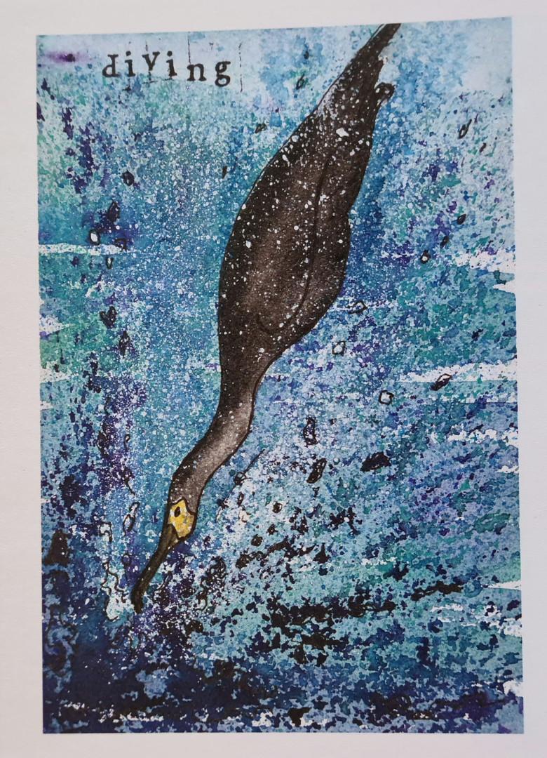 diving card