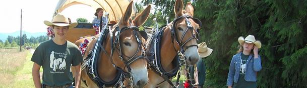 HorsemanshipParade.png