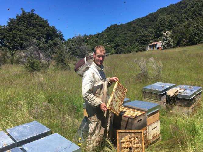 Tim beekeeping.JPG