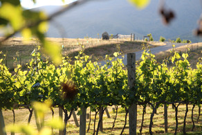 Food and Wine Walking Tour: A Taste of Cromwell