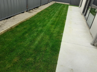 First cut on a new lawn
