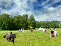 Glen-Carlyn-Dog-Park.jpg