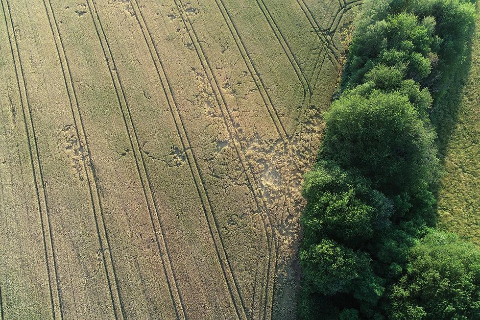 Wildschadenvermessung mit Drohnen in der Landwirtschaft