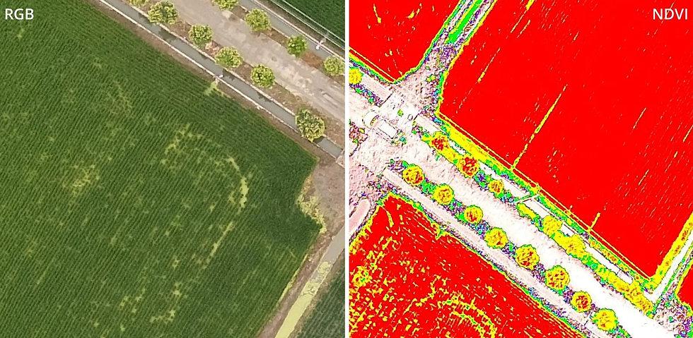 Drohnenaufnahme mit Multispektralkamera.