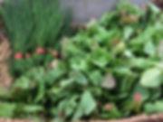MARKET sorrel and chives.JPG