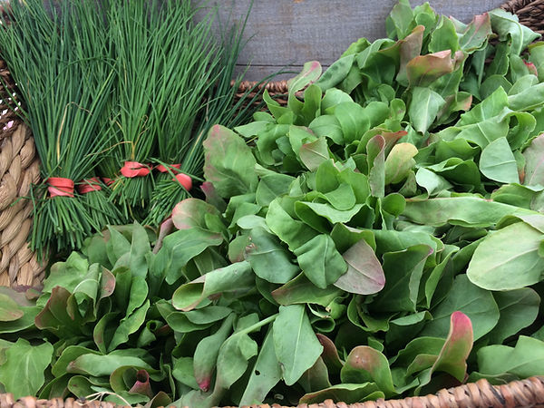 MARKET sorrel and chives.JPG