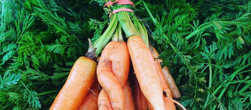 cool carrots.JPG