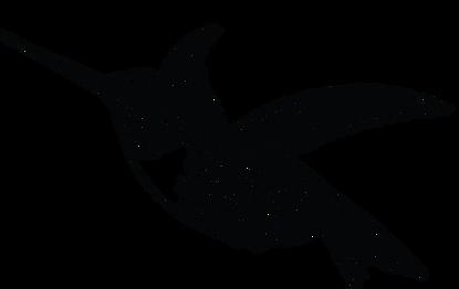 royal hummingbird 2.png