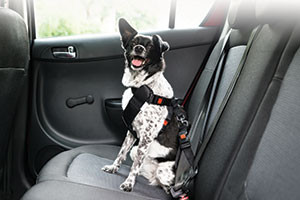 Safety While Driving with Pets