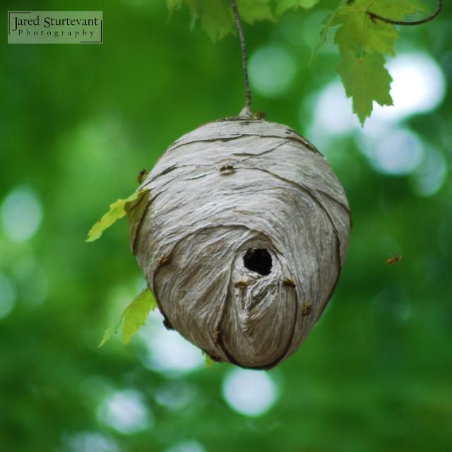 Bees' Nest