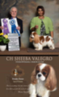 CH Sheeba Valegro