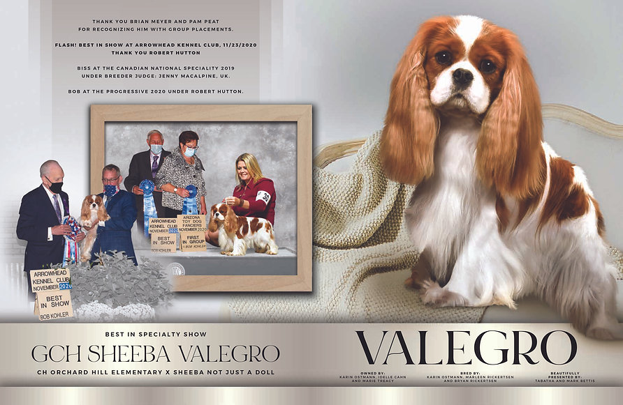 GCH Sheeba Valegro