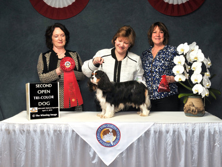 Sheeba Day Dream Believer at the 2018 National Specialty