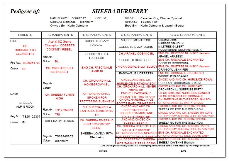 Sheeba Burrberry Pedigree.png