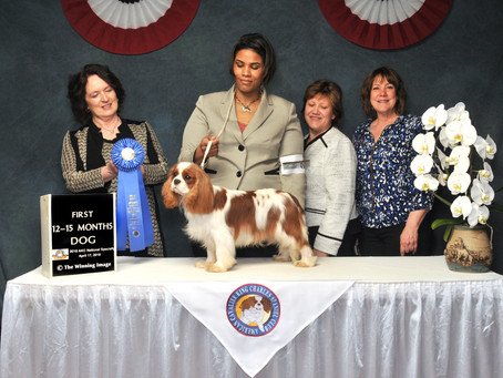 Sheeba Burberry at the 2018 National Specialty