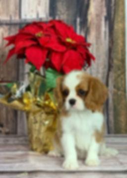 puppy 2.jpeg