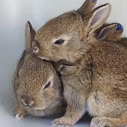 2 Young Rabbits.jpg