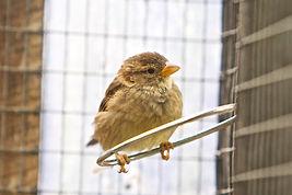572 Red List Birds.jpg