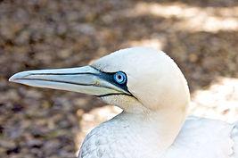 101 Bird Species.jpg