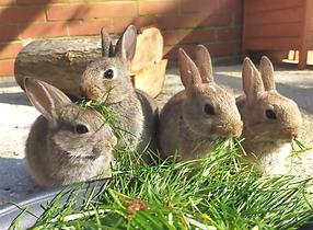 Rabbits.png