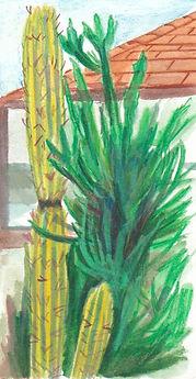 Cactus In Aruba.jpeg