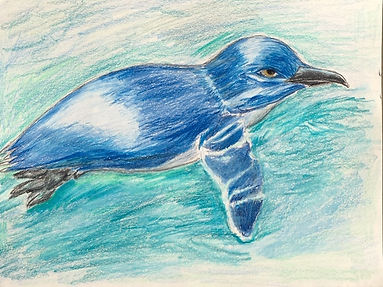 A Blue Peguin Swimming.jpg