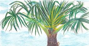 Peacock Palm Tree.jpeg