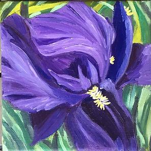 Irises Close Up.jpg