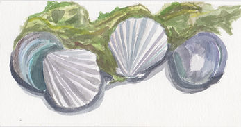 Seashells And Seaweed.jpeg