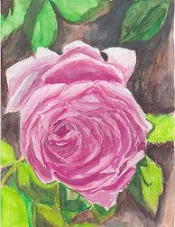 Pretty Pink Rose.jpeg