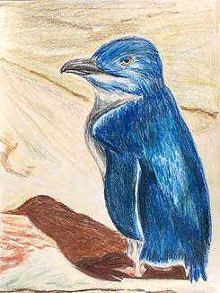 A Blue Penguin Standing.jpg