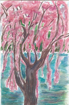 Willow Tree With Blossoms.jpeg