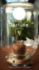 Fortune Coffee TVC.jpg