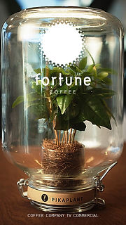 Fortune Coffee TVC.jpg