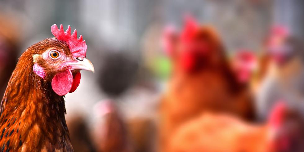 Geflügelverkauf am 07.08.2019 an unseren Raiffeisen-Märkten