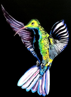Hummingbird Pose