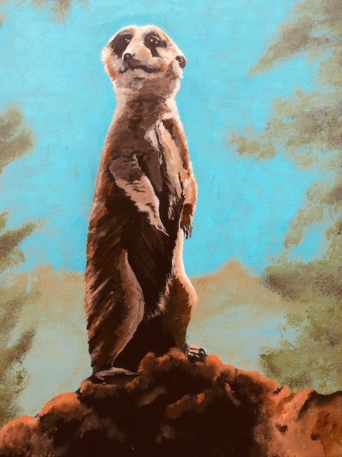 Meerkat View