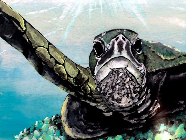 Turtle Attitude